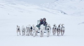Greenland Dog Wallpaper Free