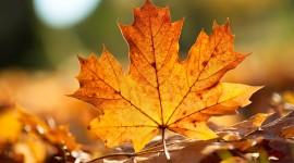 Orange Leaves Best Wallpaper