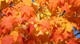 Orange Leaves Photo Download