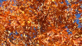 Orange Leaves Photo Free