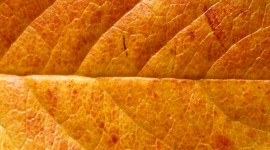 Orange Leaves Wallpaper Download
