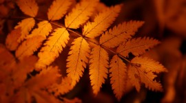 Orange Leaves Wallpaper Gallery