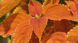 Orange Leaves Wallpaper HQ
