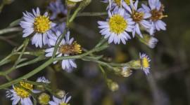Pieris Brassicae Wallpaper For IPhone