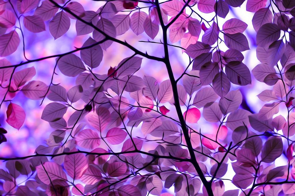 Purple Leaves wallpapers HD