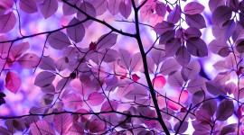 Purple Leaves Wallpaper Free