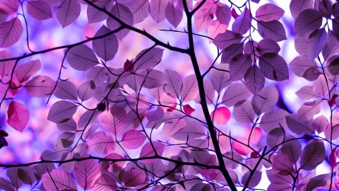Purple Leaves wallpapers high quality