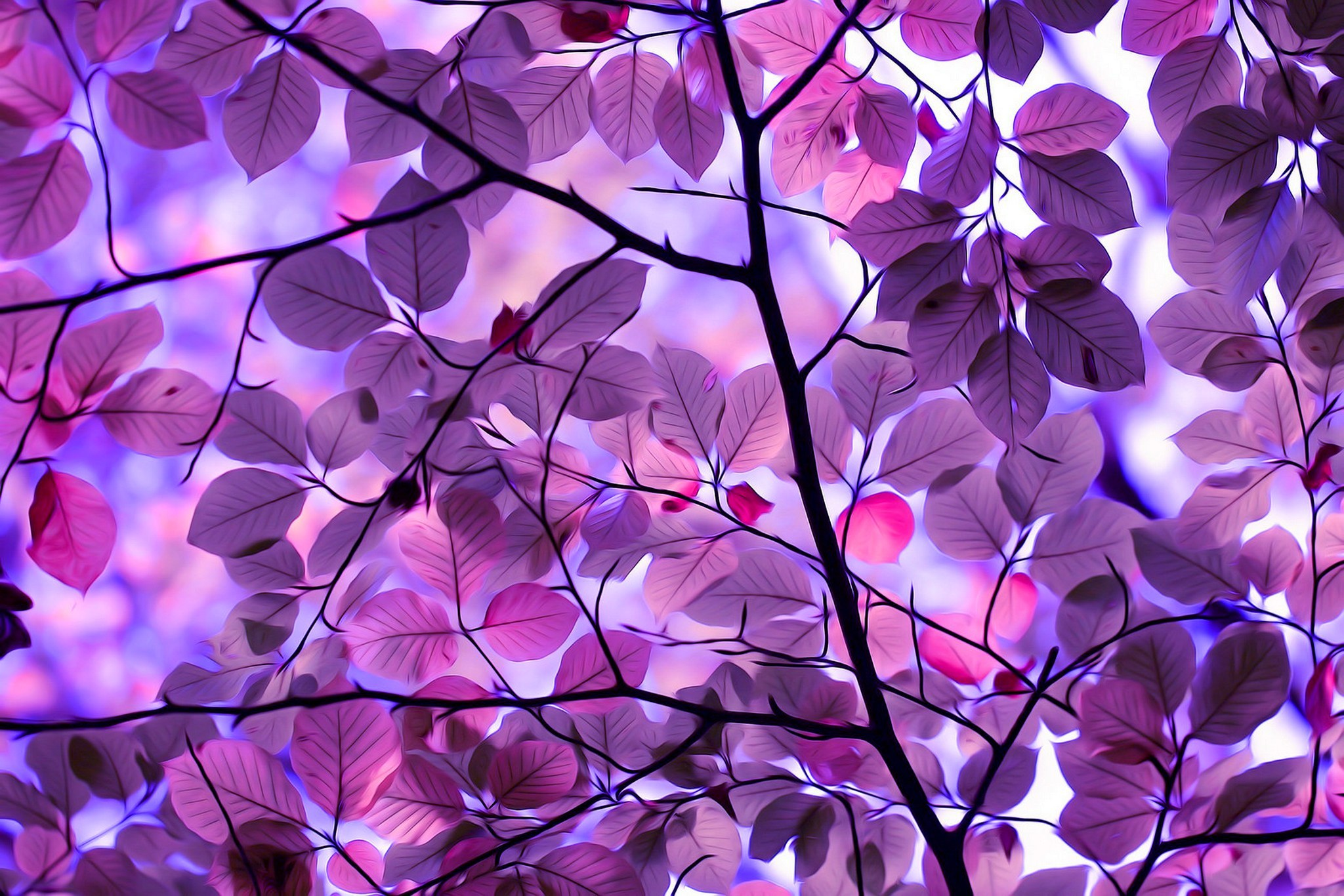 Purple Leaves Wallpapers High Quality Download Free