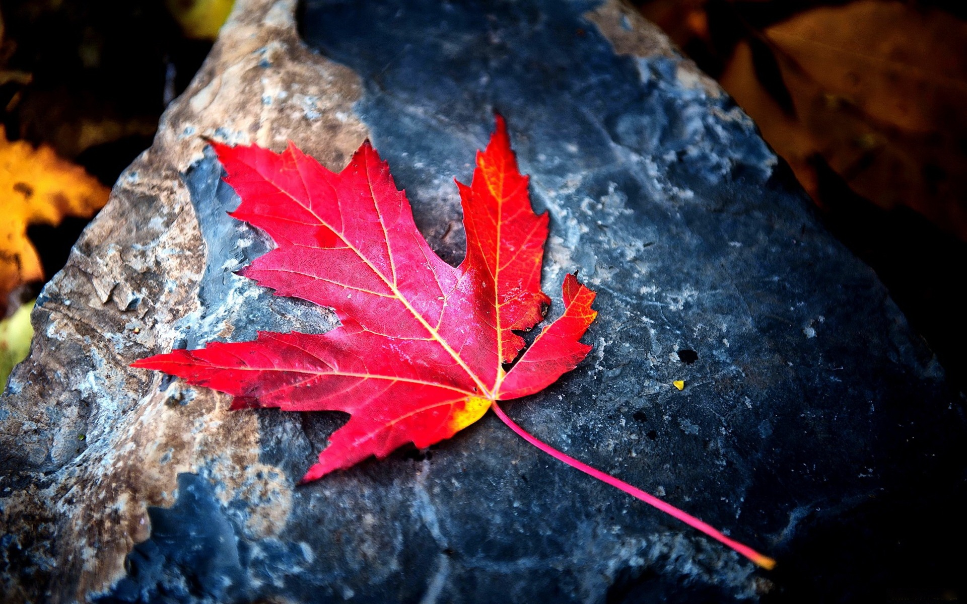 red leaves wallpapers high quality | download free