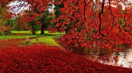 Red Leaves Wallpaper 1080p