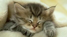 Sleeping Kittens Photo