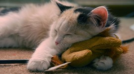 Sleeping Kittens Photo Download