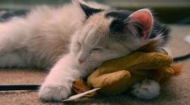 Sleeping Kittens Photo Download