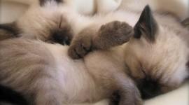 Sleeping Kittens Photo Free#1