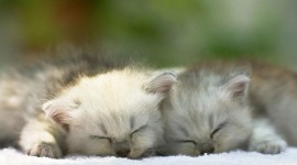 Sleeping Kittens Photo#1