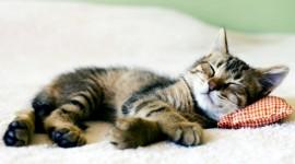 Sleeping Kittens Wallpaper 1080p