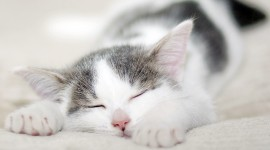 Sleeping Kittens Wallpaper 1080p#1