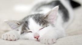 Sleeping Kittens Wallpaper 1080p#1