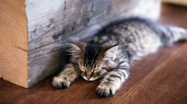 Sleeping Kittens Wallpaper Download