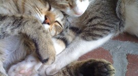 Sleeping Kittens Wallpaper For IPhone