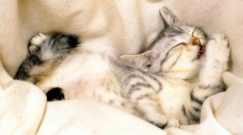 Sleeping Kittens Wallpaper For PC