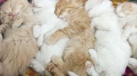 Sleeping Kittens Wallpaper Free