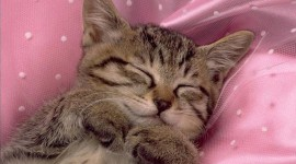 Sleeping Kittens Wallpaper Gallery