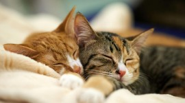 Sleeping Kittens Wallpaper HQ