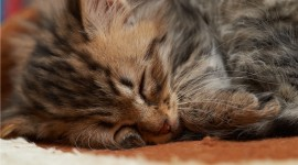 Sleeping Kittens Wallpaper#1