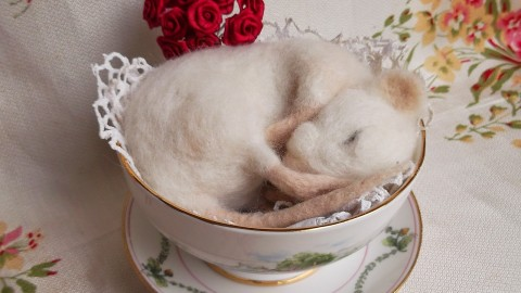 Sleeping Mouse wallpapers high quality