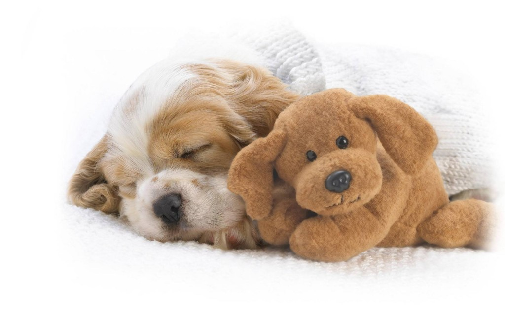 Sleeping Puppies wallpapers HD