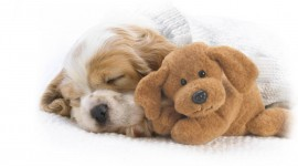 Sleeping Puppies Best Wallpaper