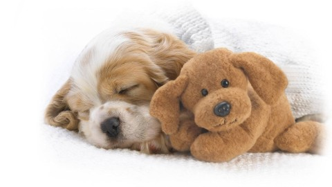 Sleeping Puppies wallpapers high quality