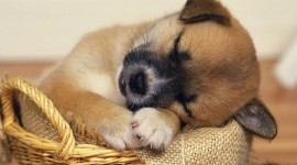 Sleeping Puppies Wallpaper For Desktop