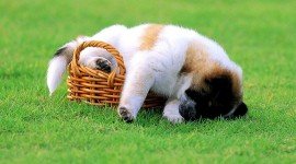 Sleeping Puppies Wallpaper Free