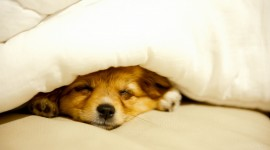 Sleeping Puppies Wallpaper Full HD