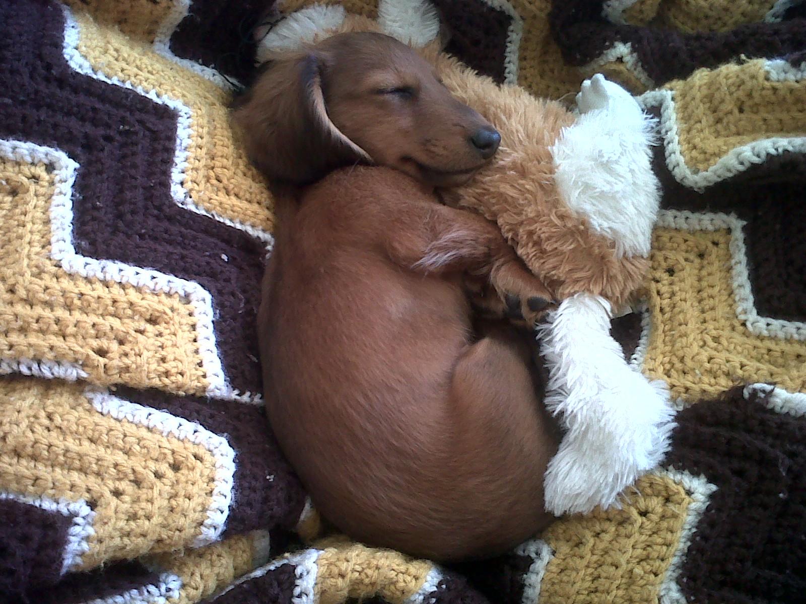 Puppy sleeping with teddy bear