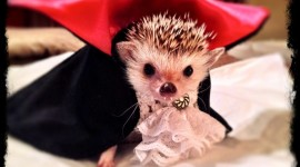 Small Hedgehogs Image