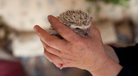 Small Hedgehogs Photo Free#2