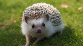 Small Hedgehogs Photo#1