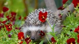 Small Hedgehogs Wallpaper 1080p