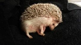 Small Hedgehogs Wallpaper#1