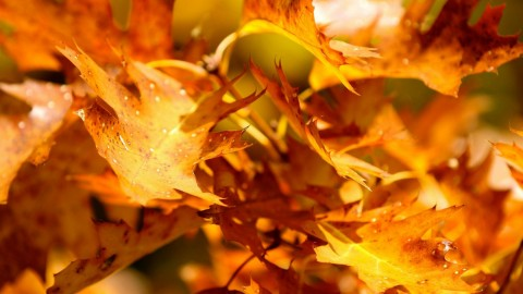 Yellow Leaves wallpapers high quality