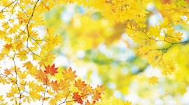 Yellow Leaves Wallpaper 1080p