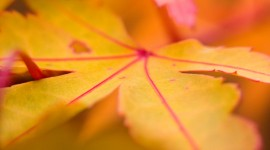 Yellow Leaves Wallpaper Download