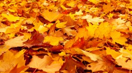 Yellow Leaves Wallpaper Full HD