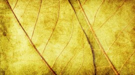Yellow Leaves Wallpaper Gallery