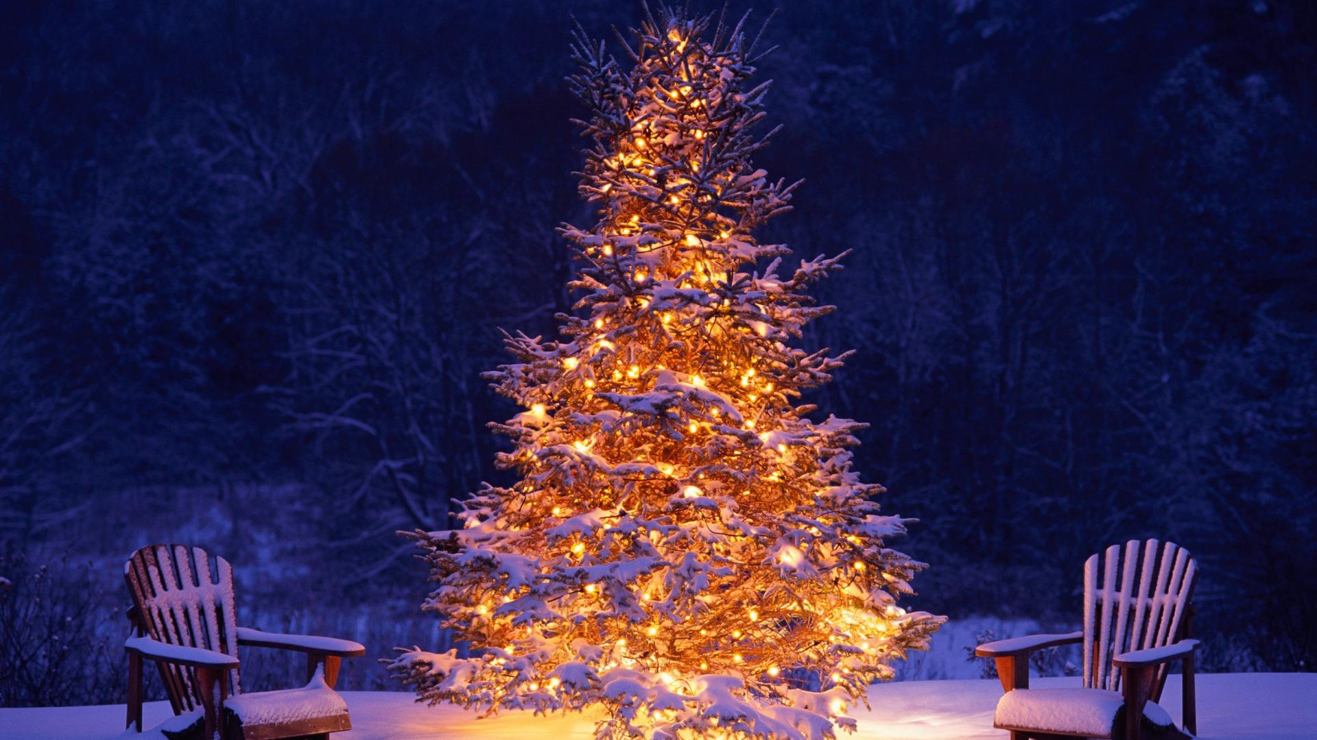 4k christmas tree wallpapers high quality