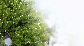 4K Christmas Tree Wallpaper HQ