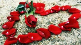 4K Heart Of Roses Wallpaper